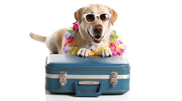 Pet Friendly Hotels Uk Only